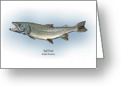 Game Drawings Greeting Cards - Bull Trout Greeting Card by Ralph Martens
