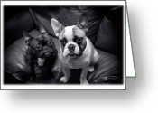 Buddies Greeting Cards - Bulldog Buddies Greeting Card by Mal Bray