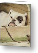 Chained Greeting Cards - Bulldog Greeting Card by Cecil Charles Windsor Aldin
