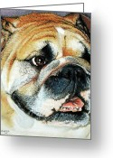 Dog Prints Pastels Greeting Cards - Bulldog Head Portrait Greeting Card by Juan Jose Espinoza