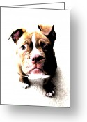 Canine Greeting Cards - Bulldog Puppy Greeting Card by Michael Tompsett