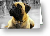 Chic Greeting Cards - BullMastiff Greeting Card by Jai Johnson