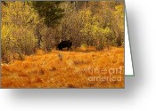 Rocky Mountain National Park Greeting Cards Greeting Cards - Bullwinkle Greeting Card by Jon Burch Photography