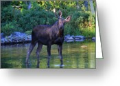 Baxter Park Greeting Cards - Bullwinkle Greeting Card by Lori Deiter