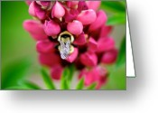 Honey Bee Greeting Cards - Bumble Snuggle Greeting Card by Lisa Knechtel