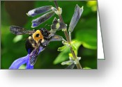 Biting Greeting Cards - Bumblebee Greeting Card by Karen Slagle