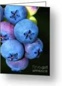 Clump Greeting Cards - Bunch of Blueberries Greeting Card by Sharon  Talson