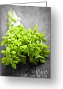 Spice Photo Greeting Cards - Bunch of fresh oregano Greeting Card by Elena Elisseeva