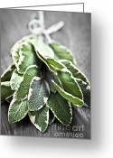 Herb Greeting Cards - Bunch of fresh sage Greeting Card by Elena Elisseeva