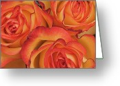 Orange Flower Photo Greeting Cards - Bunch Of Orange Roses Greeting Card by Kim Haddon Photography