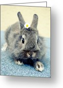 Most Greeting Cards - Bunny Greeting Card by Falko Follert