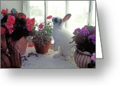 Paws Greeting Cards - Bunny in window Greeting Card by Garry Gay