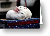 Adorable Bunny Greeting Cards - Bunny Love Greeting Card by John Rizzuto