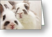 Animal Head Greeting Cards - Bunny Pals Greeting Card by Jenni Holma