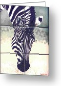 Wildlife Art Ceramics Greeting Cards - Burchells Zebra Colt Greeting Card by Dy Witt