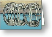Four Animals Greeting Cards - Burchells Zebra (equus Burchelli) Drinking At Waterhole, Etosha, Namibia Greeting Card by Digital Vision.