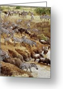 Maasai Mara Greeting Cards - Burchells Zebra Equus Burchellii Greeting Card by Gerry Ellis