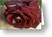 Red Roses Greeting Cards - Burgundy Rose Greeting Card by Svetlana Sewell