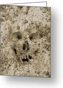Photo Greeting Cards - Buried Skull Greeting Card by Dave Gordon