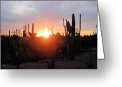 Forest Landscape Greeting Cards - Burning Horizon Greeting Card by