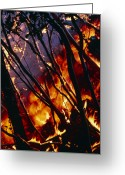 Big Island Greeting Cards - Burning Trees From A Lava Flow, Hawaii Greeting Card by G. Brad Lewis