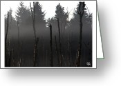 Dan Daulby Greeting Cards - Burnt Trees in Fog Greeting Card by Dan Daulby