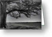 Flood Plain Greeting Cards - Burr Oak Tree Greeting Card by Jane Linders