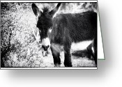 Burro Greeting Cards - Burro and the Banana Greeting Card by John Rizzuto