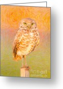 Burrowing Owl Greeting Cards - Burrowing Owl Impasto Greeting Card by Clarence Holmes
