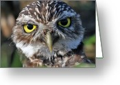 Burrowing Owl Greeting Cards - Burrowing Owl Greeting Card by Larry Linton