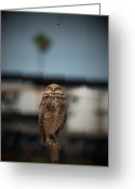 Bird Of Prey Digital Art Greeting Cards - Burrowing Owl - Those Darn Flies Greeting Card by Elaine Snyder