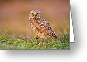 Burrowing Owl Greeting Cards - Burrowing Owl Greeting Card by TNWA Photography