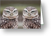 Wild Bird Greeting Cards - Burrowing Owls Greeting Card by Tony Emmett