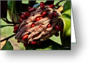 Christopher Holmes Photography Greeting Cards - Bursting Forth Greeting Card by Christopher Holmes