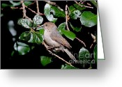Titmouse Greeting Cards - Bushtit Bird On A Tree . 40D8141 Greeting Card by Wingsdomain Art and Photography