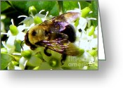 Bumble Greeting Cards - Busy as a Bee Greeting Card by Karen Wiles
