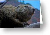 Carpenter Lake Greeting Cards - Busy Beaver Greeting Card by LeeAnn McLaneGoetz McLaneGoetzStudioLLCcom