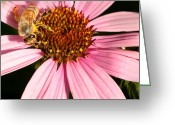 Cone Flower Greeting Cards - Busy Bee Greeting Card by Bill  Wakeley