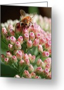 Honey Bee Greeting Cards - Busy Bee Greeting Card by DigiArt Diaries by Vicky Browning