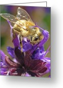 Honey Bee Greeting Cards - Busy Bee Greeting Card by Katie LaSalle-Lowery