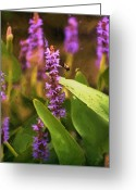 Purples Greeting Cards - Busy Bee Greeting Card by Richard Rizzo