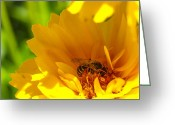 Depth Of Field Greeting Cards - Busy Bee  Greeting Card by Scott McGuire