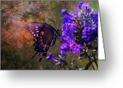 Spicebush Swallowtail Greeting Cards - Busy Spicebush Butterfly Greeting Card by J Larry Walker