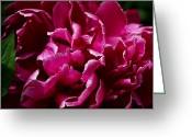 Fuchsia Greeting Cards - But for a Moment Greeting Card by Rona Black