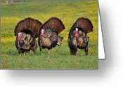 Eastern Turkey Greeting Cards - Butter Balls in Butter Cups Greeting Card by Todd Hostetter