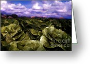 Transformative Art Greeting Cards - Butter Lettuce in Yuma Greeting Card by Lisa Redfern