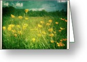 Buttercup Greeting Cards - Buttercups Greeting Card by Neil Carey Photography