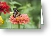 Bill Cannon Photo Greeting Cards - Butterflies and Blossoms Greeting Card by Bill Cannon