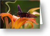 Merlin Greeting Cards - Butterflies Are Free... Greeting Card by Arthur Miller
