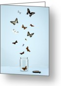 Bottle Cap Photo Greeting Cards - Butterflies Escaping From Jar Greeting Card by Martin Poole